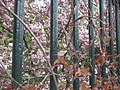 [picture: Bars with Blossom 2]