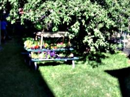 [picture: Toronto Garden]