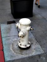 [picture: White fire hydrant]