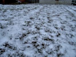 [picture: Grass peeking through snow]