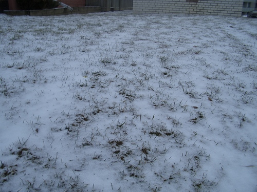 [Picture: Grass peeking through snow]