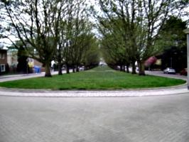 [picture: Avenue]