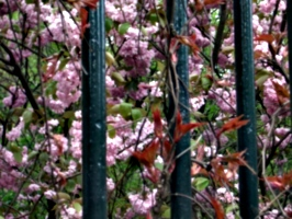 [picture: Bars with Blossom]