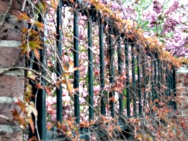 [picture: Bars with Blossom 3]