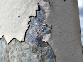 [picture: Chipped plaster]
