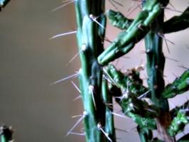 [picture: Cactus 3]