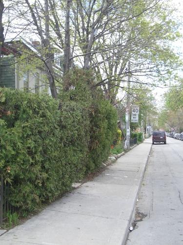 [Picture: Major Street, Toronto, 2]