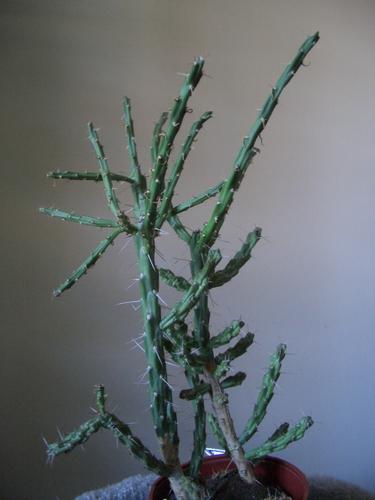 [Picture: Cactus]