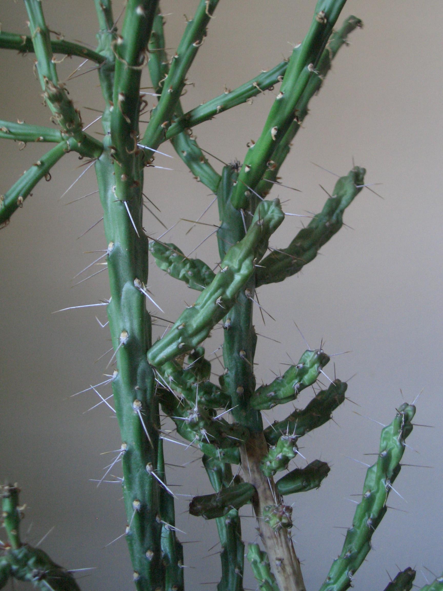 [Picture: Cactus 2]