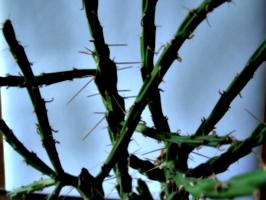 [Picture: Cactus 4]