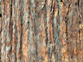 [picture: tree trunk 2]