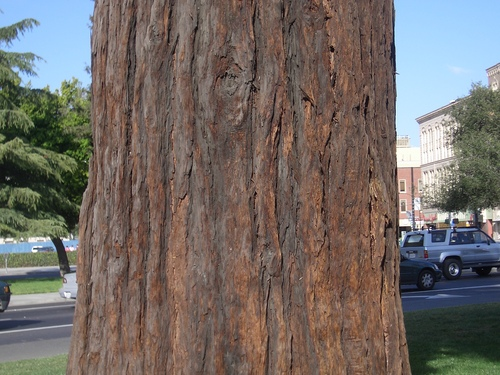 [Picture: tree trunk 1]