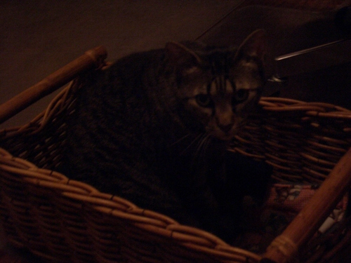 [Picture: Moonkitty in her basket]