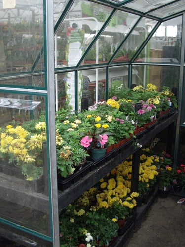 [Picture: Greenhouse at a Nursery 2]