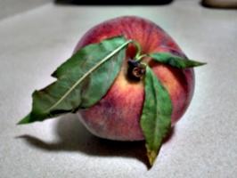 [Picture: Peach 2]