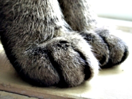[picture: Cosmos' paws]