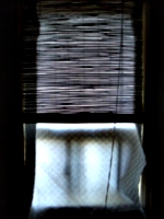 [picture: Window Blinds]