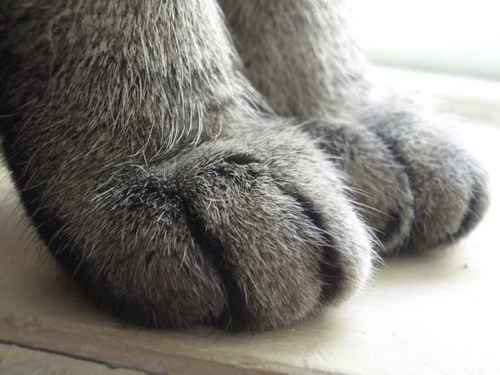 [Picture: Moonkitty's paws]