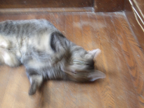 [Picture: Cosmos the Cat wriggling]