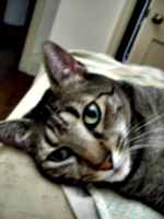 [Picture: Moonkitty blurry]