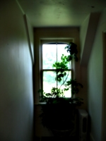 [picture: Window with plant]