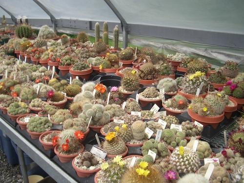 [Picture: Cactus Farm]