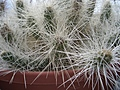 [Picture: Cactus 1]
