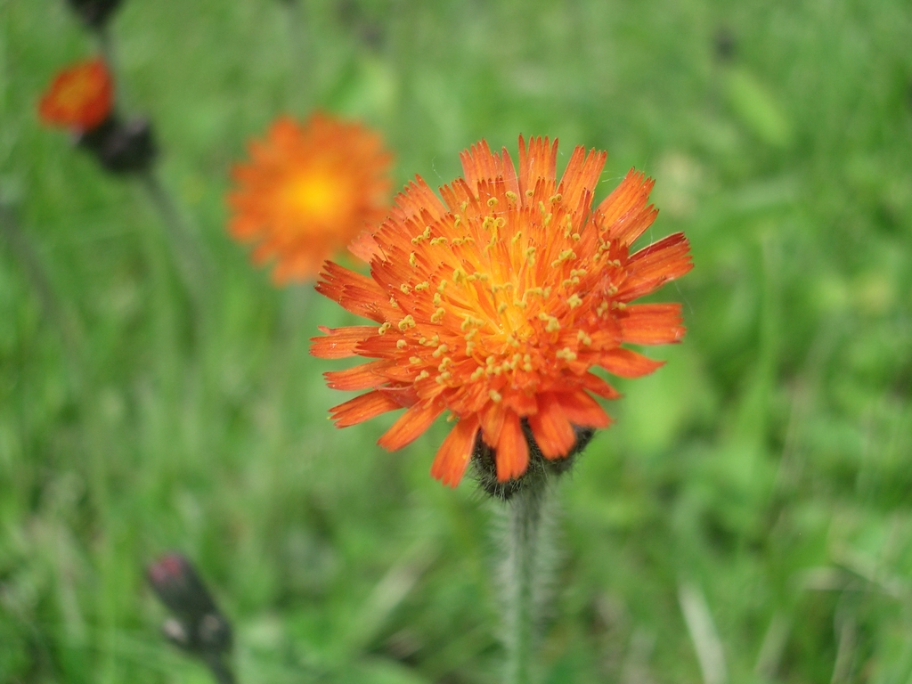 [Picture: Orange flower]