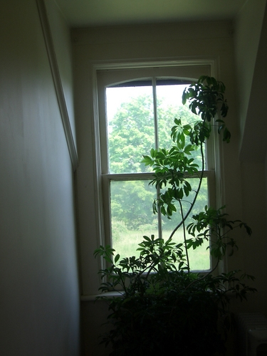 [Picture: Window with plant 2]