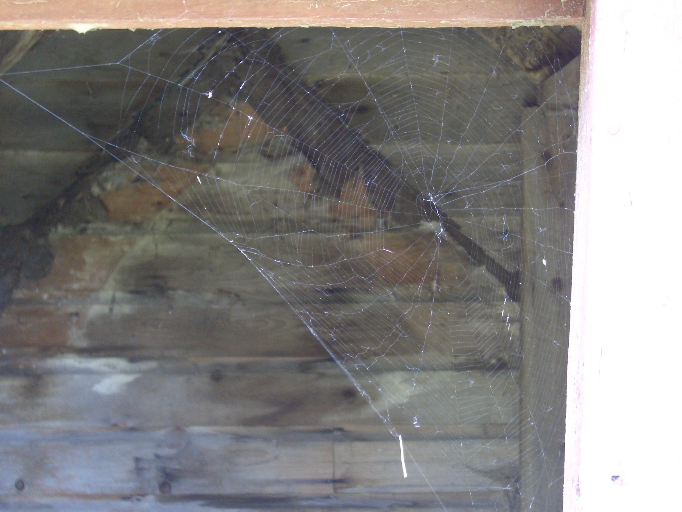[Picture: Cobweb]