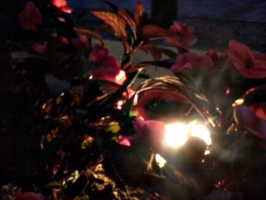 [picture: Light amidst red foliage]