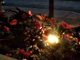 [picture: Light amidst red foliage 2]