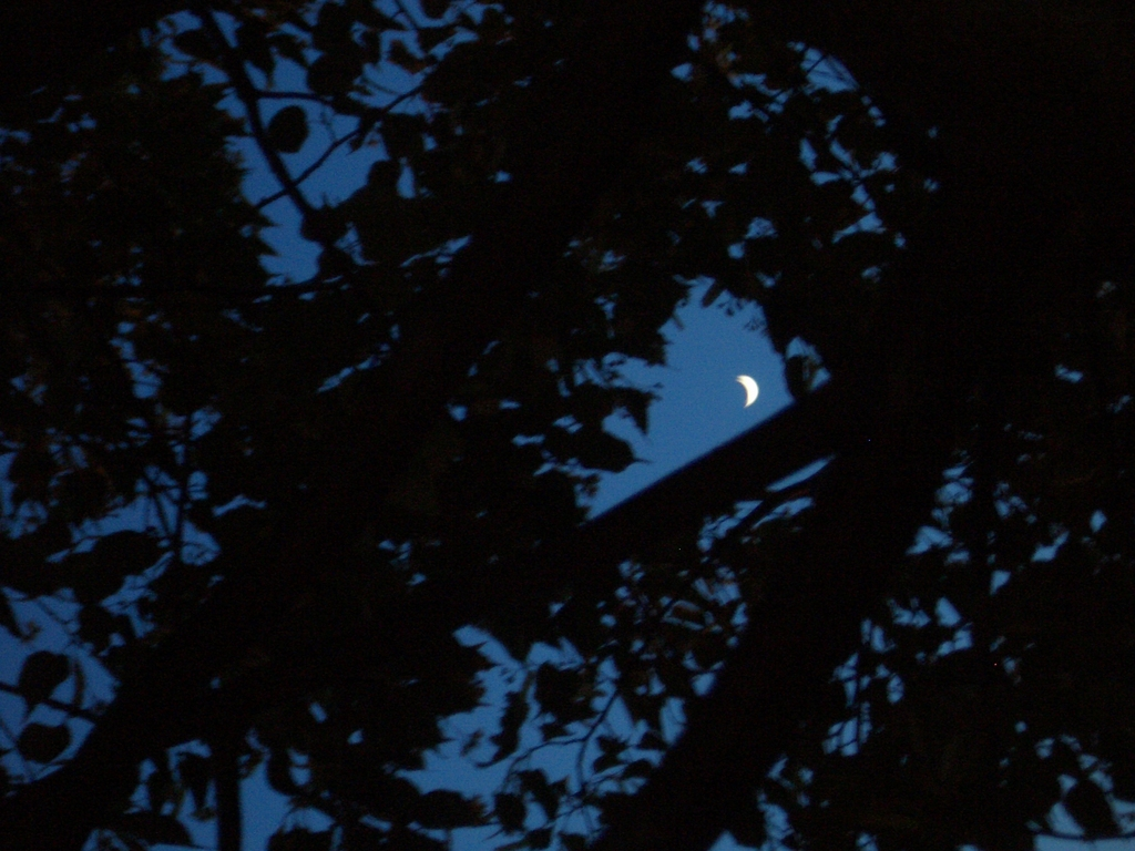 [Picture: Moon through trees]