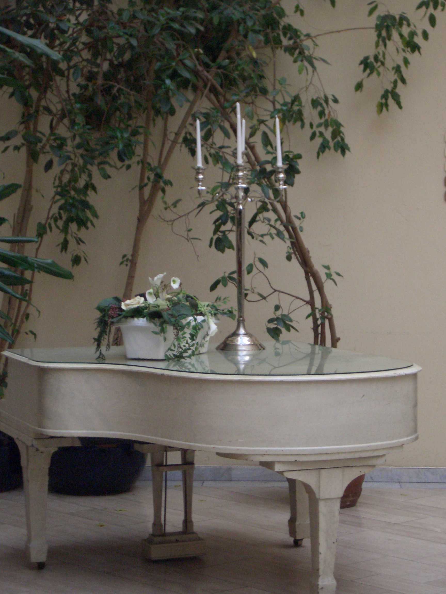 [Picture: White grand piano with candelabra and large potted plant 2]
