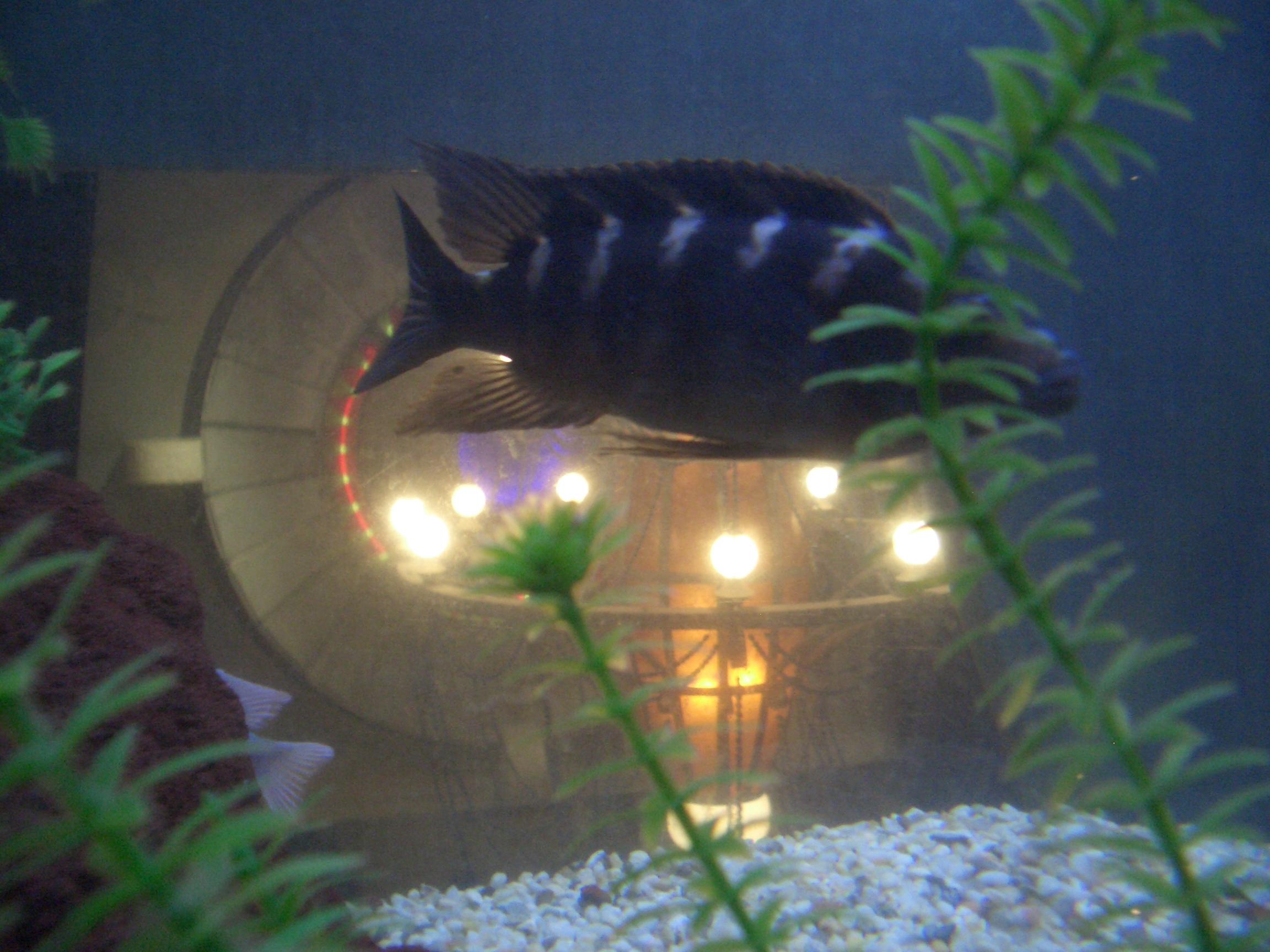[Picture: Westin Aquarium]