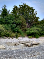 [picture: Rocks and Tree on Pebbly Beach]