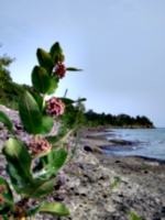 [picture: Beach with Wild Flower]