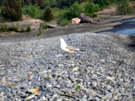 [picture: Bird on the beach 4]