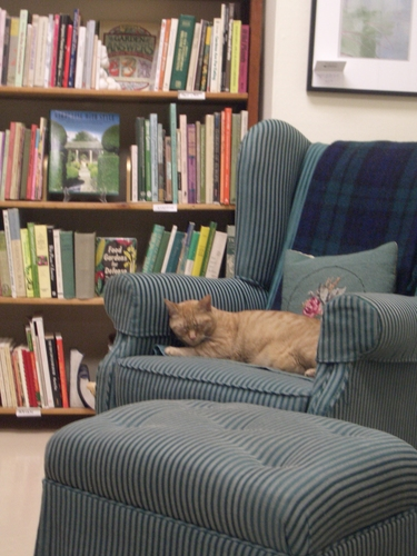 [Picture: Bookshop Cat]