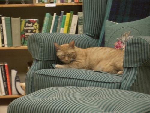 [Picture: Bookshop Cat 2]