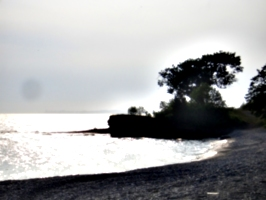 [Picture: Point Petre Tree]