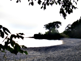 [Picture: Point Petre Tree 3]