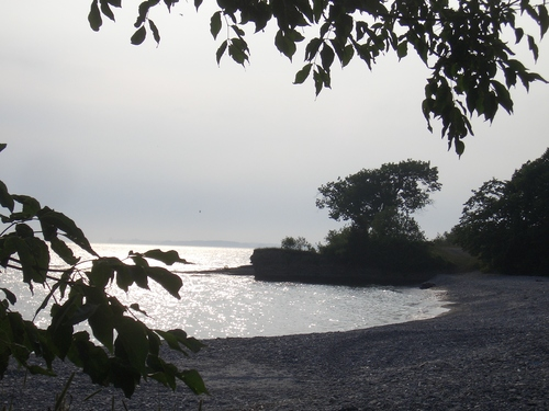 [Picture: Point Petre Tree 4]