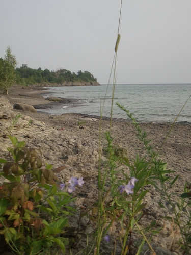 [Picture: Beach with Wild Flower 2]