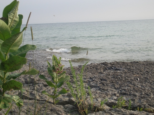 [Picture: Beach with Wild Flower 3]