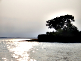 [Picture: Point Petre Tree 6]