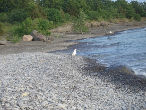 [Picture: Bird on the beach 3]