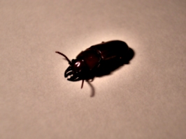 [picture: Bug 6]
