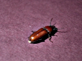 [picture: Bug 8]
