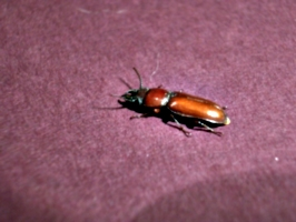 [picture: Bug 10]